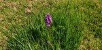 orchid 2.jpg