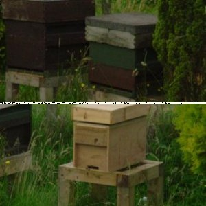 thriving nucs and hives in Derbyshire