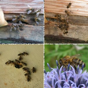 My bees