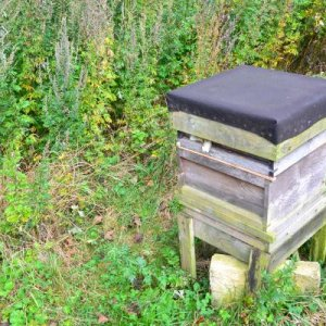My first hive...but not the last