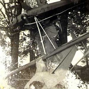 treewreckage