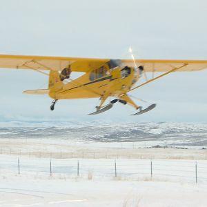 cub on skis 055