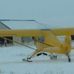 cub on skis 118