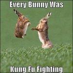 Kung Fu bunnies.jpg