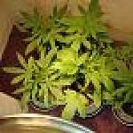 plantguy212