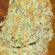 RonnieB