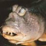 docfishwrinkle