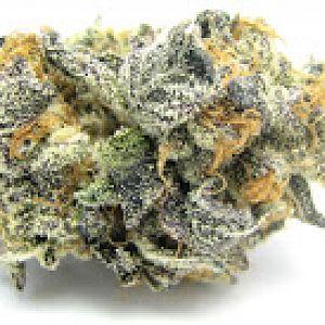Blue Cookie Weed