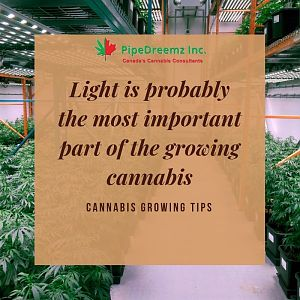 Cannabis Growing Tips