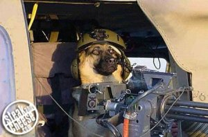 Dogs_Of_War.jpg