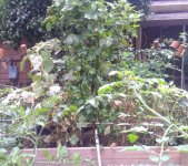small beans and cucumbers.jpg