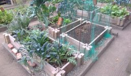 small kale and artichoke beds.jpg