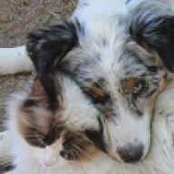MamaSheepdog
