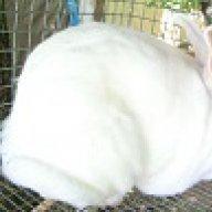 Mary Ann's Rabbitry