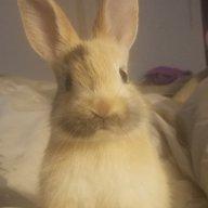 Jessica's Rabbits