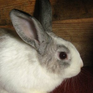 tennessee and rabbits 023