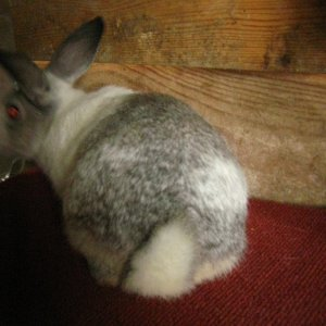 tennessee and rabbits 027