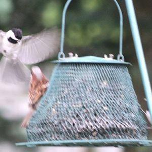 Backyard bird feeder gathering
